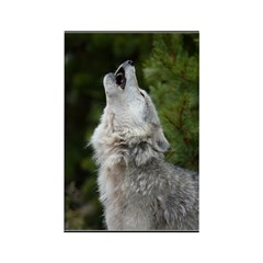 Morning Wolf Rectangle Magnet