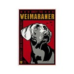 Obey the Weimaraner! Magnets (10 pack)