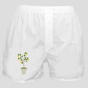 Lemon Tree Boxer Shorts