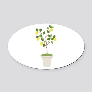 Lemon Tree Oval Car Magnet