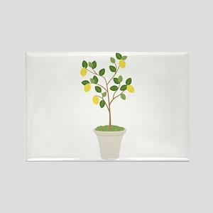 Lemon Tree Magnets