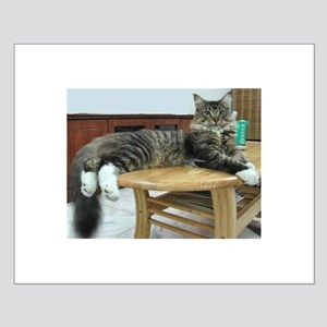maine coon laying 2 Posters