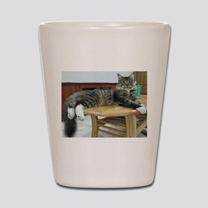 maine coon laying 2 Shot Glass