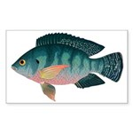 Nile Tilapia Sticker