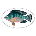 Nile Tilapia Sticker