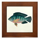 Nile Tilapia Framed Tile