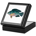 Nile Tilapia Keepsake Box