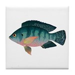 Nile Tilapia Tile Coaster