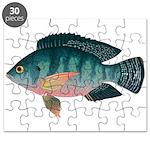 Nile Tilapia Puzzle