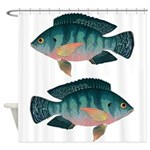 Nile Tilapia Shower Curtain