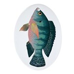 Nile Tilapia Oval Ornament