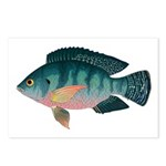 Nile Tilapia Postcards (Package of 8)