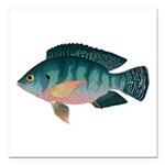 Nile Tilapia Square Car Magnet 3