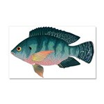 Nile Tilapia Car Magnet 20 x 12