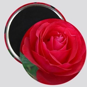 Single red rose Magnets