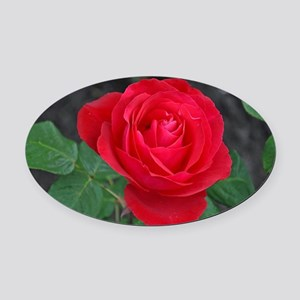 Single red rose Oval Car Magnet
