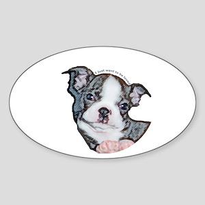 Boston Terrier Puppy Oval Sticker