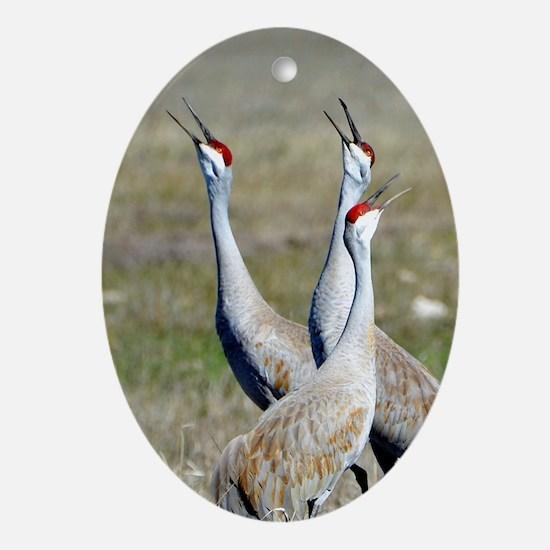Unique Bird art Oval Ornament