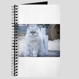 persian chinchilla Journal