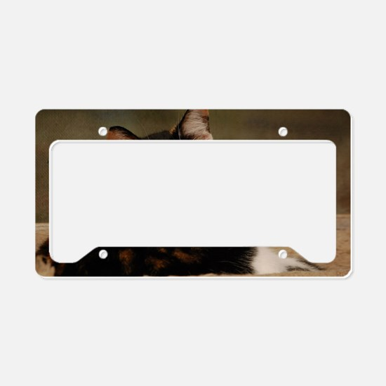 Cool Calico License Plate Holder