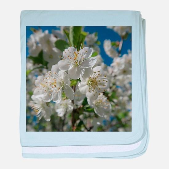 white cherry blossom in spring agains baby blanket