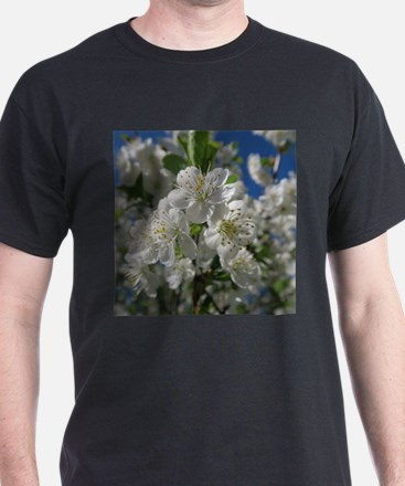 white cherry blossom in spring against a b T-Shirt