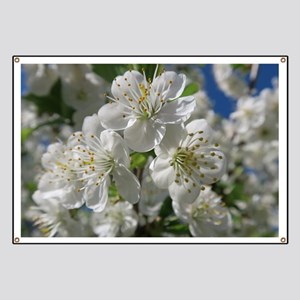 white cherry blossom in spring against a bl Banner