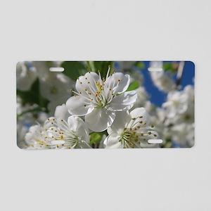 white cherry blossom in spr Aluminum License Plate