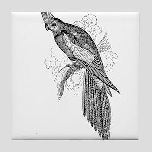 Vintage Parakeet Tropical Bird Black Tile Coaster