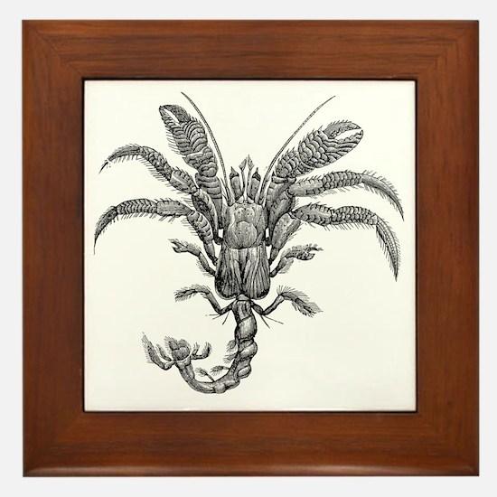 Cute Hermit crabs Framed Tile