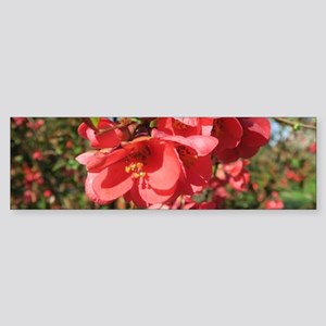 pink blossom against a blue sky in Bumper Sticker