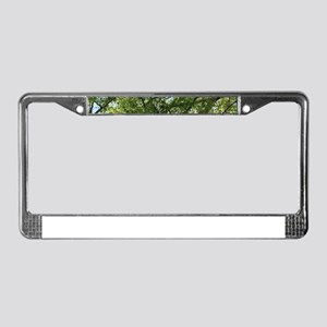 young fresh leaves of a birch License Plate Frame