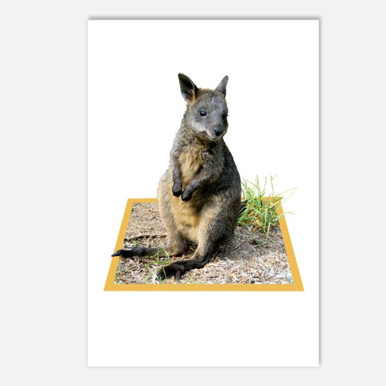 Autumn The Swamp Wallaby Postcards (package Of 8)