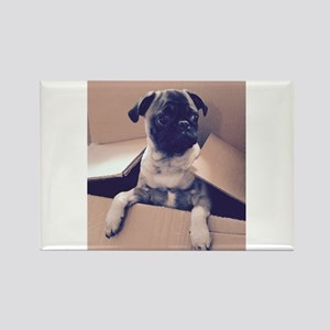 Pugsley The Pug Puppy In A Box Magnets