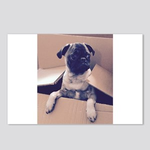 Pugsley The Pug Puppy In A Box Postcards (Package
