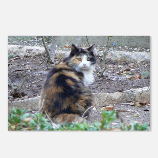 Cats of the Holy Land Postcards (Package of 8)