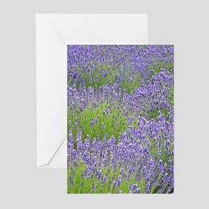 Purple lavender field Greeting Cards