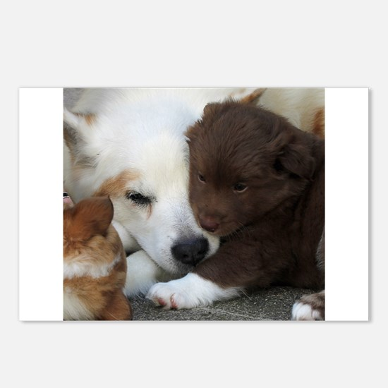 Cute Icelandic sheepdog Postcards (Package of 8)
