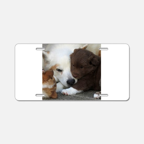Funny Chocolate brown Aluminum License Plate