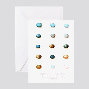 Bird Eggs of New England Journal Greeting Cards