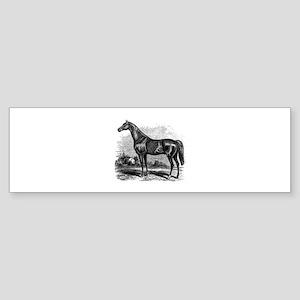 Vintage Race Horse American Black W Bumper Sticker