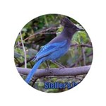 "Steller's Jay 3.5"" Button (100 pack)"