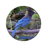 Steller's Jay 3.5