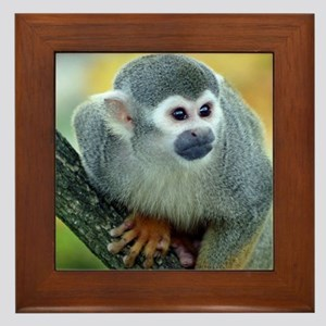 Monkey004 Framed Tile