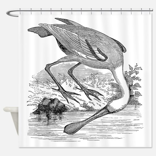 Vintage Spoonbill Tropical Bird Bla Shower Curtain