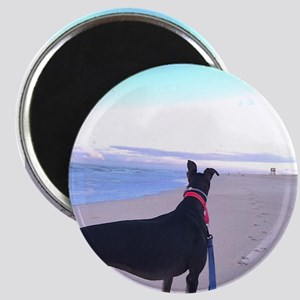 Greyhound on a Beach Magnets