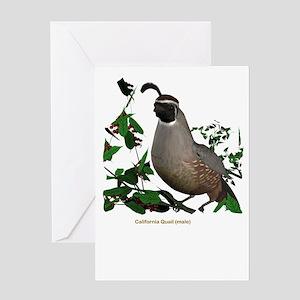 California Quail (male) Greeting Card