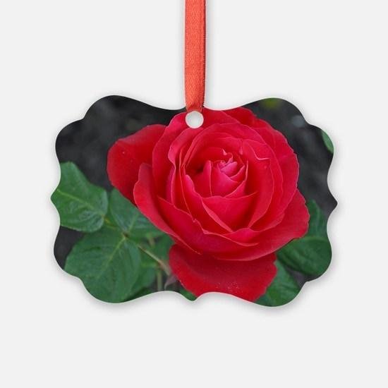 Cute Roses Ornament