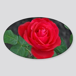 Single red rose Sticker