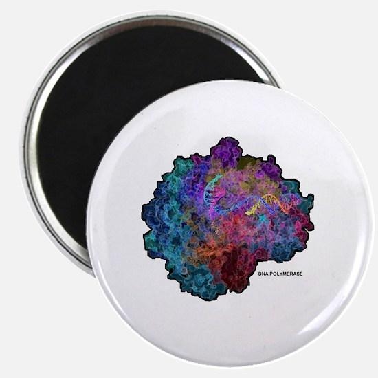 Cute Dna polymerase Magnet